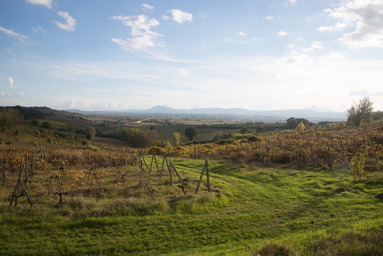 fasciano-wijngaarden-oktober-2016