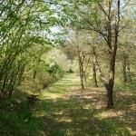 Het pad naast de vijver