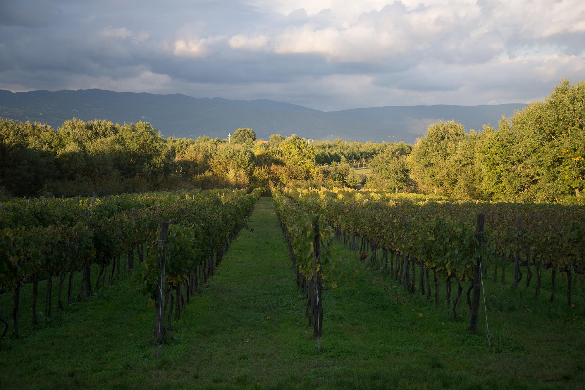 wijngaard-19-oktober-2016